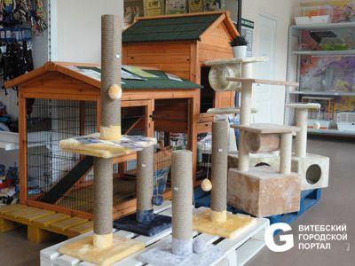 Ветлечебница кот и пёс в витебске