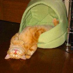 cat_fot09