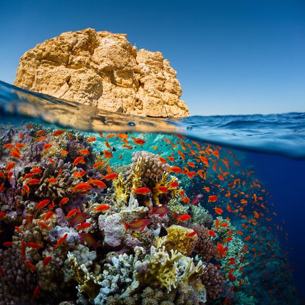 Split-shot-of-the-bright-coral-reef-in-Ras-Muhammad-National-Park-Red-Sea-Egypt_shutterstock_224716426