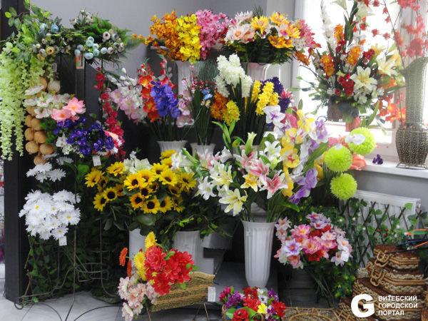Купить цветы комнатные в витебске