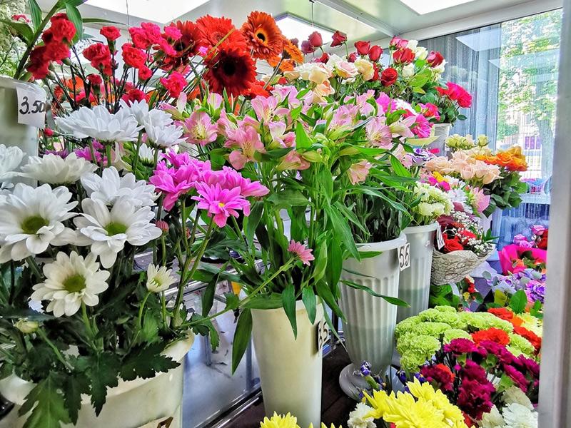 Цена на цветы в витебске, ботаника заставляют делать кунилингус