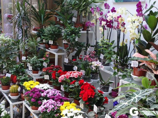 Купить комнатные цветы в витебске