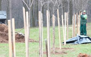 Более 129 тыс. деревьев и кустарников посажено в Витебской области с начала года